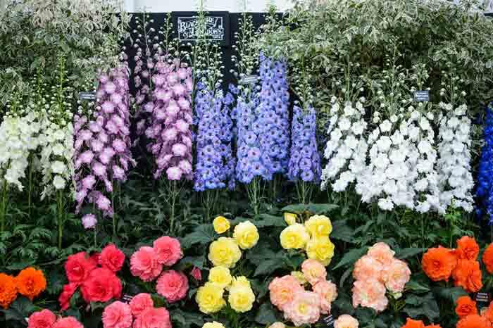 Inspire Your Gardening At BBC Gardenersu0027 World Live