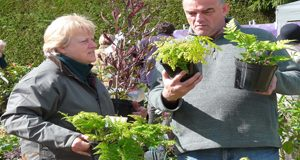 box-Choosing-ferns-at-Knoll-Gardens-copy