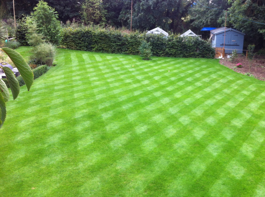 Preparing your lawn for spring |
